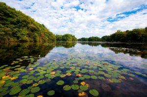 Easton, MA Pond